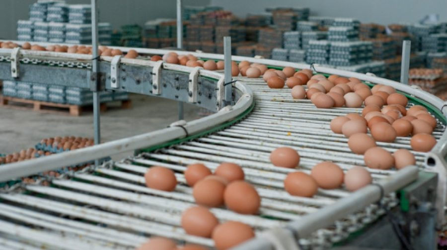 Moldova, spre calea de a obține dreptul de export în UE de carne de pasăre și ouă categoria B