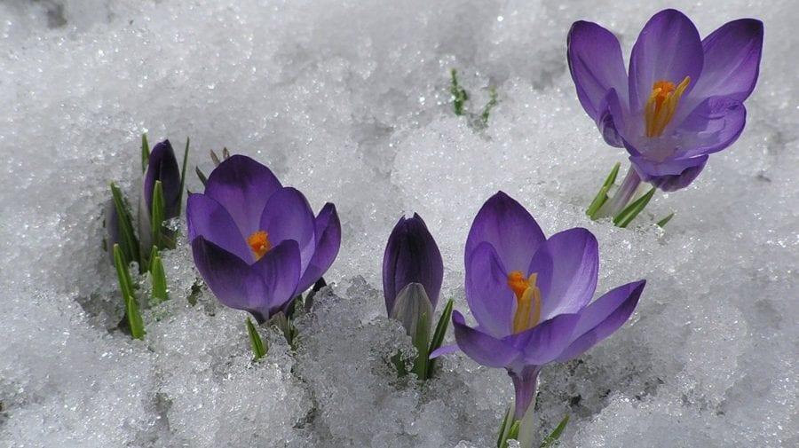 Se pare că iarna nu se vrea plecată. Ce temperaturi ne aduce începutul primăverii