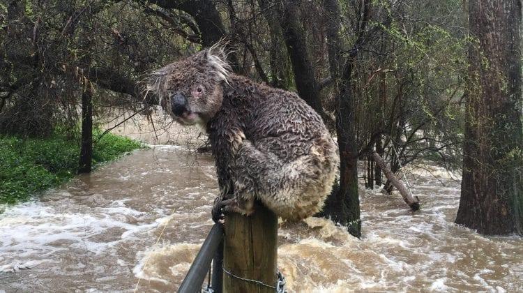 (GALERIE FOTO) Orașul New South Wales, scufundat sub apă