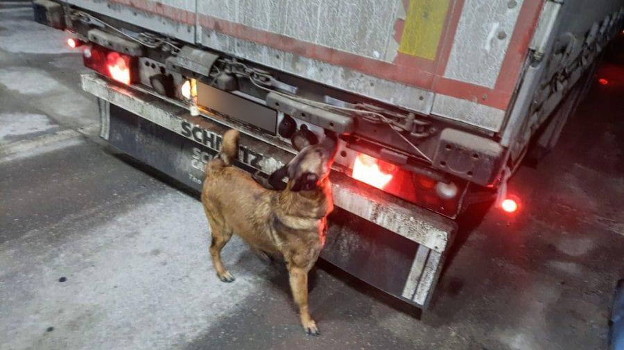 """S-a remarcat ca un """"profesionist"""". Câinele Poliției de Frontieră Iuna a depistat 150 de pastile psihotrope"""