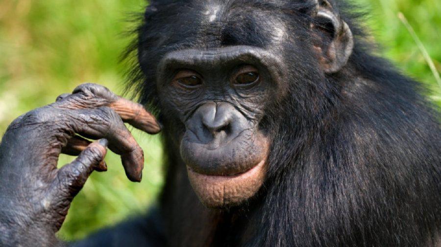 Primele animale din lume vaccinate împotriva COVID-19 la o grădină zoo din SUA