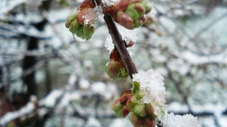 Primăvara se lasă așteptată. Ce temperaturi prezic meteorologii pentru sfârșitul săptămânii