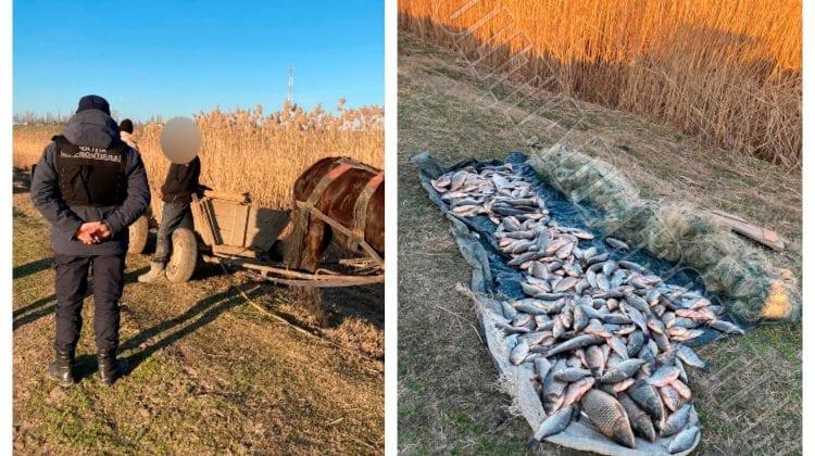 Doi consăteni din Cahul, prinși în zona de frontieră cu căruța plină cu pește pescuit ilegal. S-au ales cu amenzi