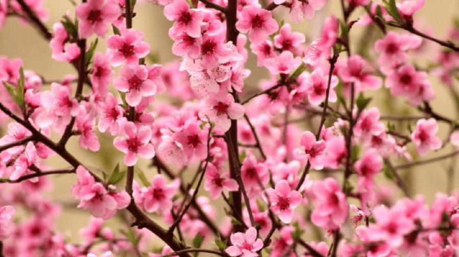 Meteo: Primăvara ne va bucura cu temperaturi calde în această săptămână