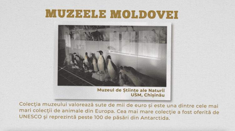 Muzeul de Științe ale Naturii, USM, Chișinău