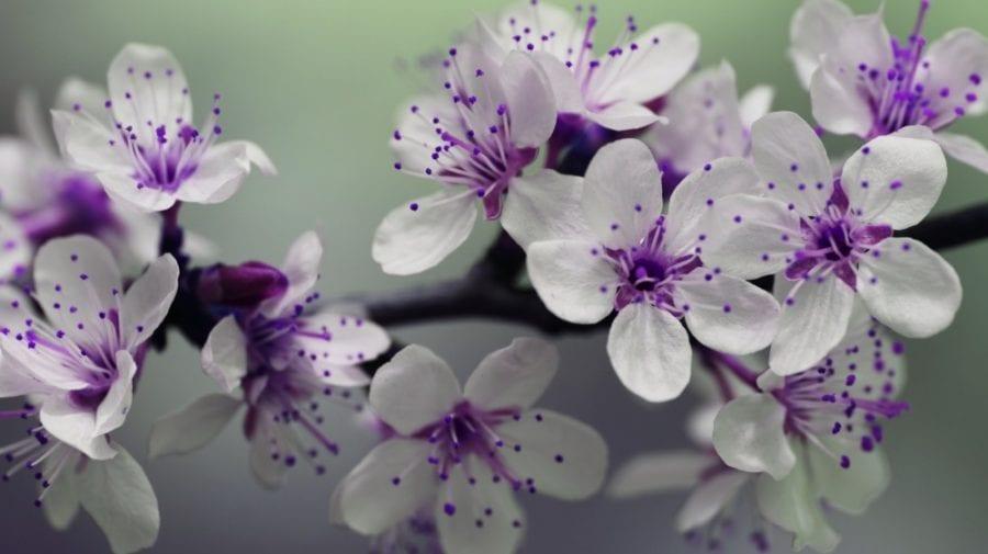 Crenguța, Ghiocel… Ce nume se sărbătoresc de Florii
