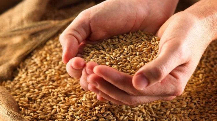Slusari: Cele 17 mii de tone de grâu urmează să fie scoase din țară după 30 aprilie