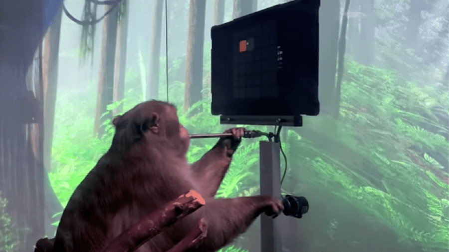 (VIDEO) O maimuță joacă telepatic ping-pong la calculator