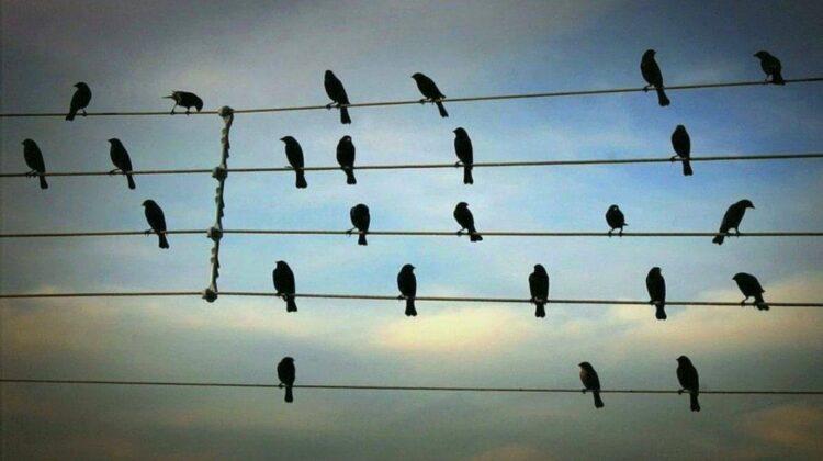 VIDEO Uimitor! Păsările își fac loc ca să încapă. Un exemplu pentru oameni