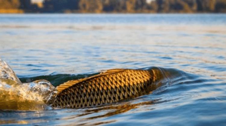 Atenție! Pescuitul este interzis din 1 aprilie. Vezi care sunt sancțiunile