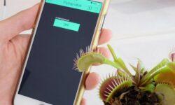 """Despre planta-robot pe care niște cercetători încearcă să o """"crească"""""""
