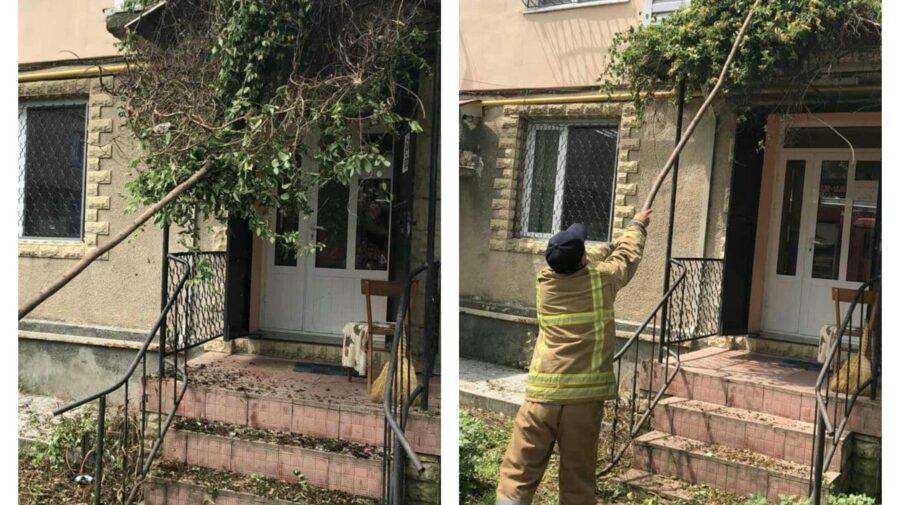 """FOTO Incredibil! Salvatorii de la Căușeni au fost chemați pentru a evacua o viperă """"venită"""" la frizerie"""
