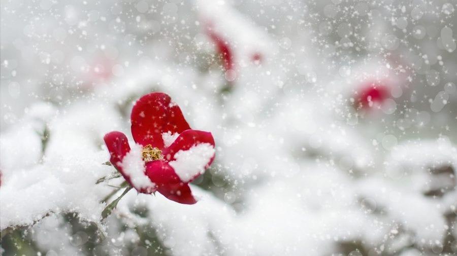 Meteorolog român: Acest aprilie va intra în topul celor mai reci din istorie