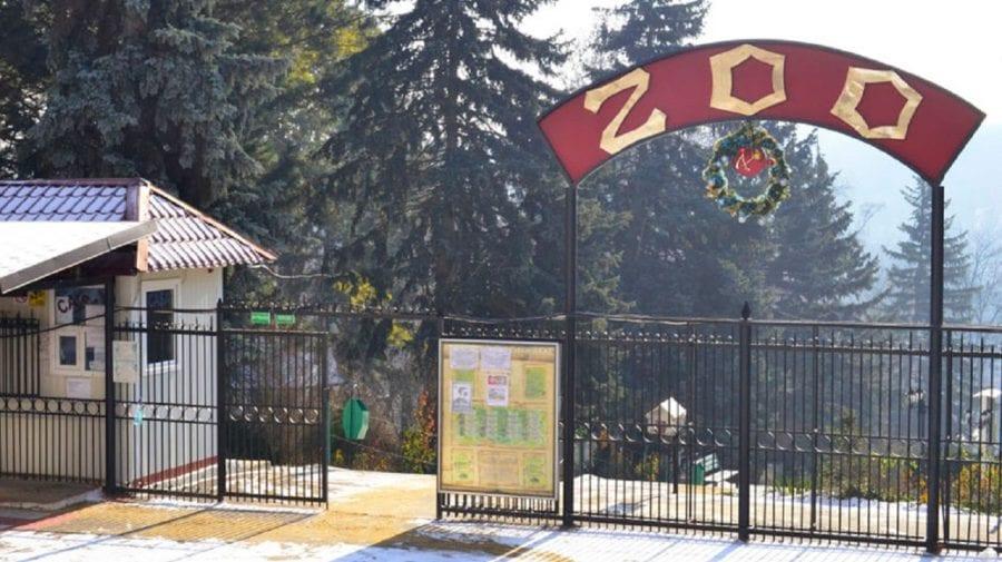 Noi locatari la Grădina Zoologică. Ceban: Unul alb şi altul roşcat