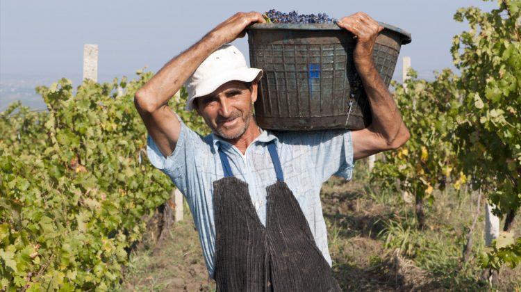 Gitana Winery – o afacere de familie în continuă dezvoltare