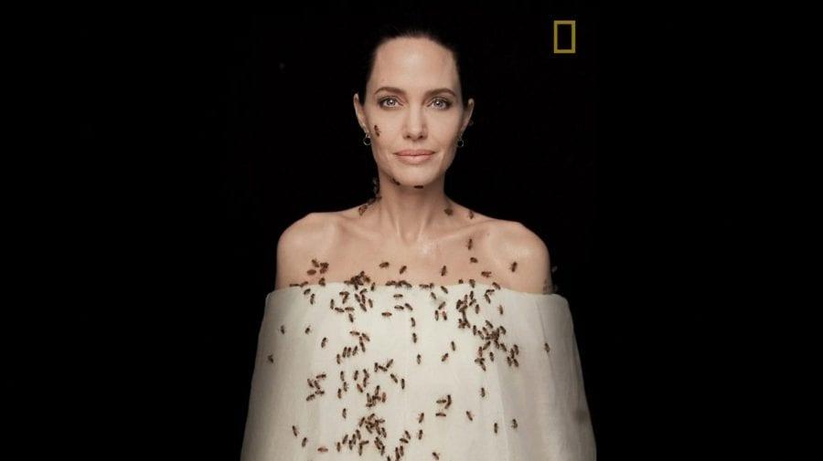 (VIDEO) 18 minute cu un roi de albine pe corp. Angelina Jolie a participat la o ședință foto periculoasă