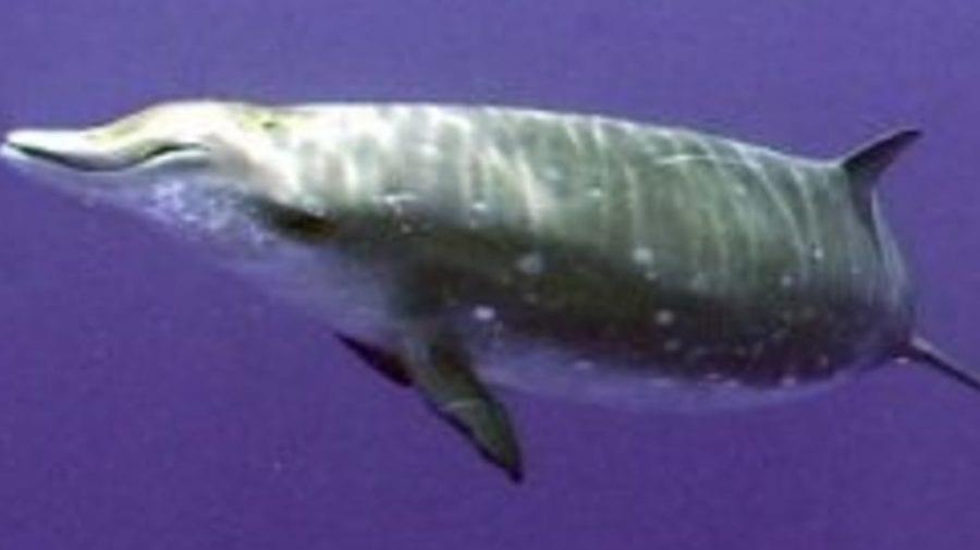Dezastru ecologic. 16 kg de plastic găsit într-o balenă eșuată în Franța