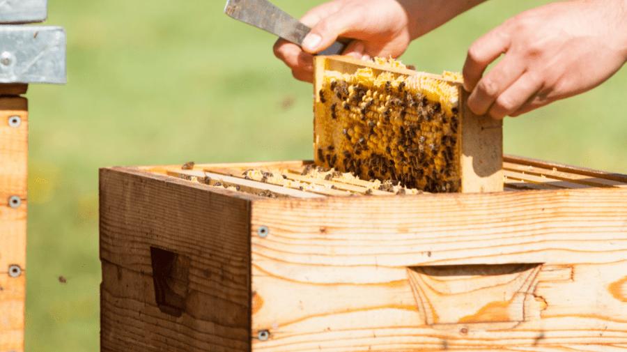 Apel de protejare a albinelor: Rolul apiculturii este extrem de important în economia țării