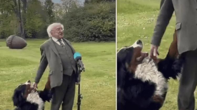 (VIDEO) Câinele președintelui a devenit viral după ce a făcut show în timp ce șeful statului făcea declarații de presă