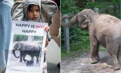 O curte americană va analiza primul proces al unui elefant împotriva unei grădini zoologice