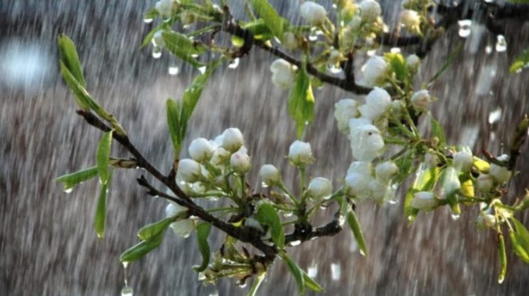 Mijlocul lui Floral mai răcoros decât începutul! Efecte pozitive și negative ale fenomenului