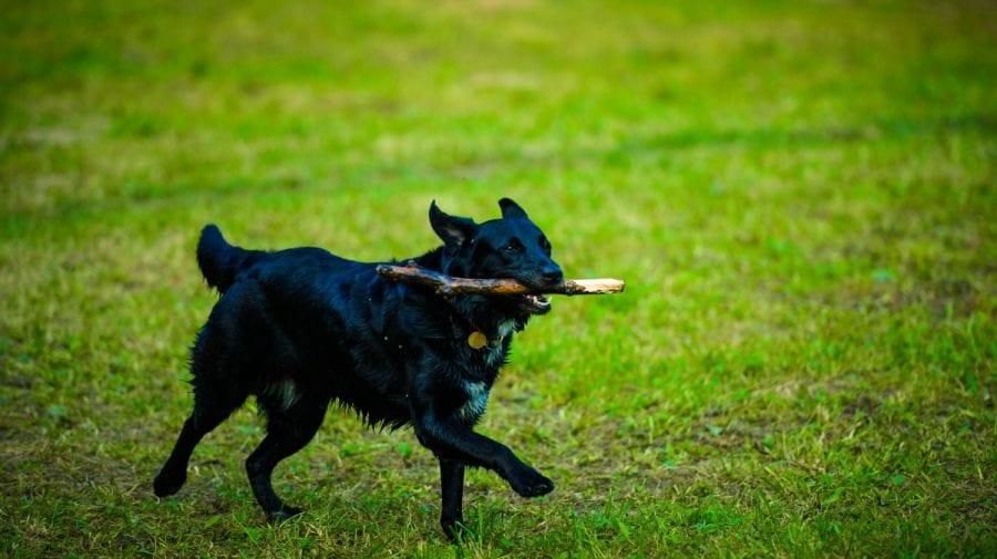 Chiar dacă e dizolvat Parlamentul o deputată propune examinarea unui proiect privind protecția animalelor de companie