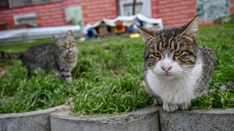 1.000 de pisici au fost eliberate pe străzile din Chicago. Care este motivul