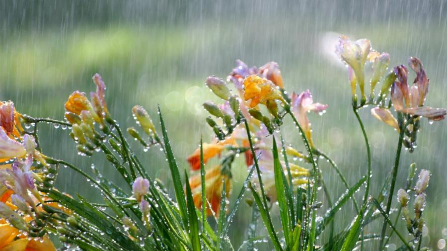 Ultima zi de primăvară ne aduce ploi pe tot teritoriul țării. Ce temperaturi se vor înregistra în termometre