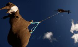 Știai că?! De ce rinocerii sunt transportați cu capul în jos pe cale aeriană