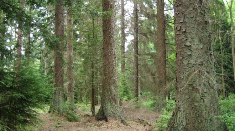 Stoparea tăierilor de păduri salvează nu doar vieți, dar și redresează economiile țărilor