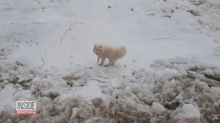 (VIDEO) Un căţel din Rusia a plutit pe o bucată de gheaţă șapte zile. Cine l-a salvat