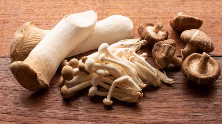 Cum prevenim intoxicațiile cu ciuperci? Recomandările specialiștilor