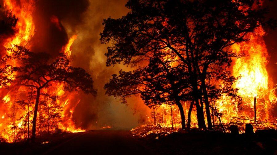 VIDEO Flăcările au luat cu asalt pădurile! Suprafața incendiilor forestiere din Iacutia ajunge la 100 mii de hectare