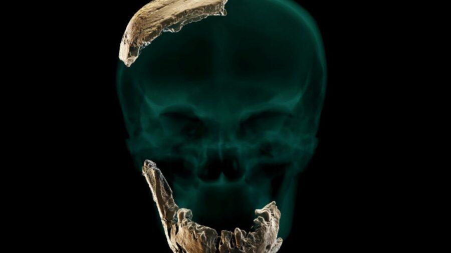 FOTO A fost descoperită o nouă specie de om preistoric! Diferă de noi, prin dinți mai mari. Nu are nici bărbie
