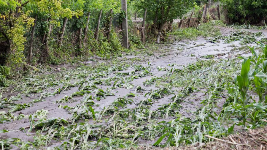 Ploile fac prăpăd. Au fost distruse zeci de hectare de livezi