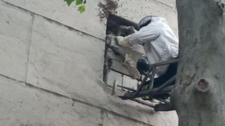 (FOTO, VIDEO) Intervenție la o grădiniță din Capitală. Salvatorii au evacuat un roi de albine