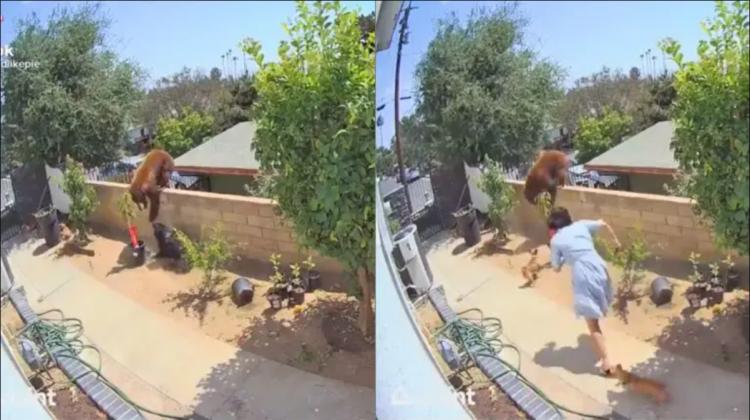 (VIDEO) Să vezi și să nu crezi! O femeie a intrat în luptă cu un urs pentru a-și salva câinii