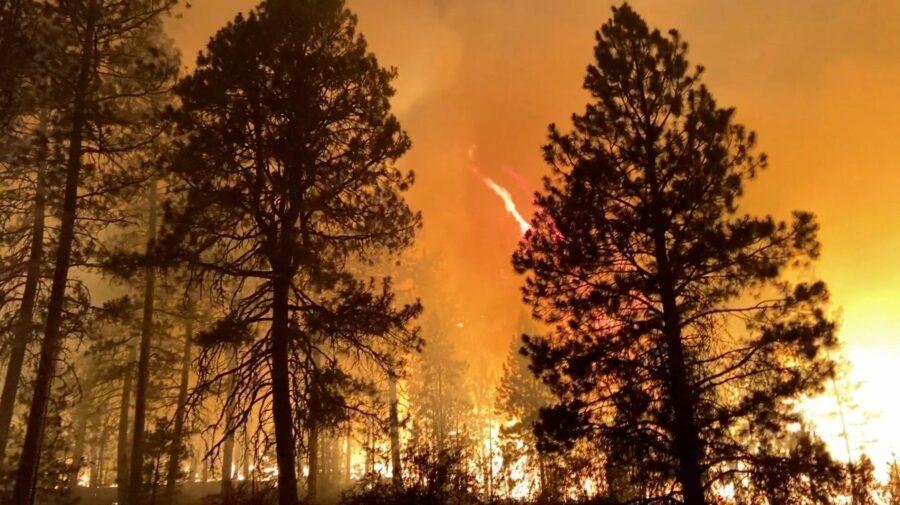 """GALERIE FOTO """"Dacă nu pleci, ești mort"""". Incendiile din SUA lasă în spate sute de hectare de cenușă"""
