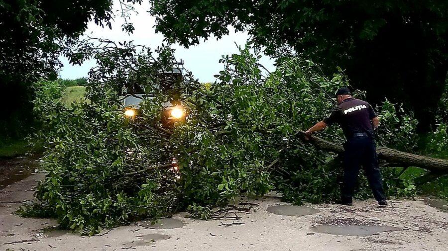 Ploile de seara trecută au făcut PRĂPĂD și la Fălești. Mai multe drumuri au fost blocate din cauza crengilor căzute