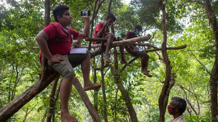 FOTO Copii din această țară, ca să aibă acces la școala online, traversează păduri cu leoparzi și urcă în copaci