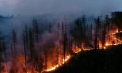 VIDEO Imagini ca dintr-un film de groază. În Turcia, o mașină circulă printr-o pădure cuprinsă de flăcări