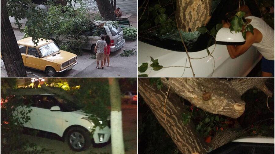Priveliști în dimineață: Copaci doborâți prin țară, mașini avariate, culturi agricole distruse. Noua prognoză meteo!