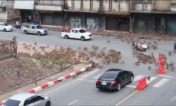"""VIDEO Maimuțe bătăușe într-o intersecție din Thailanda! """"Au ajuns să se lupte de la mâncare chiar și cu oamenii"""""""