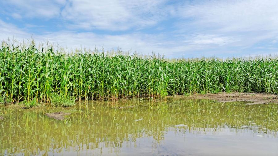 Ploile abundente distrug culturile agricole. Zeci de hectare din Leova, Hîncești, Fălești, AFECTATE