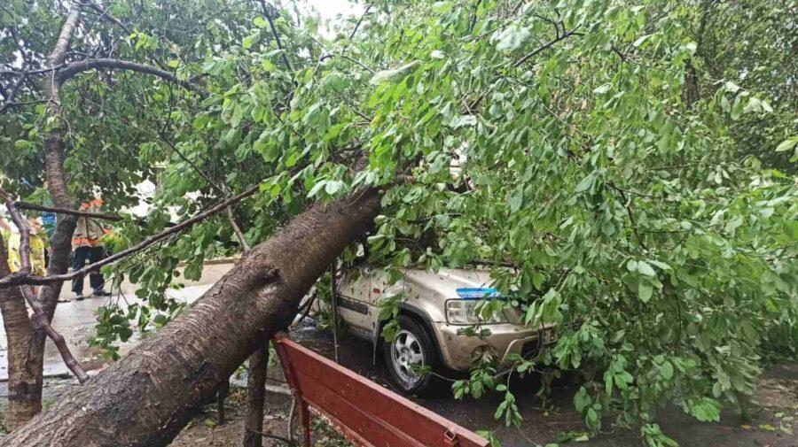 FOTO, VIDEO Prăpăd la Tiraspol: Copaci rupți și căzuți peste mașinile parcate în curțile blocurilor
