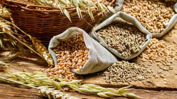 Mai multe cereale din Moldova exportate prin portul maritim din Ucraina