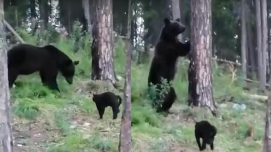 VIDEO Neînfricatul motan Vasea, care a pus pe fugă un urs într-o pădure din Rusia. Stăpânul: Vasea, nu trebuie Vasea