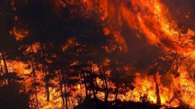 """Focuri """"din iad""""! Indendiile scapă de sub control în Grecia"""