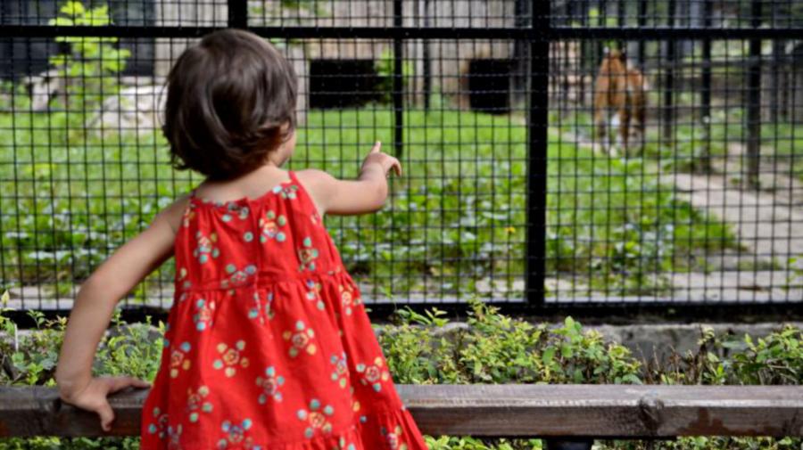 VIDEO Curioșii merg la ZOO. Copiii vor avea parte de lecții INTERACTIVE despre animale
