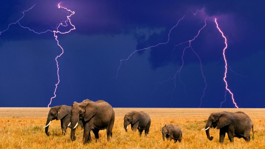 Au urechi mari, picioare groase, iar astăzi sunt omagiați! Vorbim despre elefanți. Cei mai mulți sunt în Thailanda
